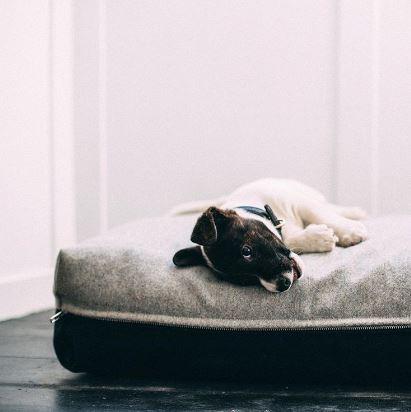 Box pillow dog bed Vackertass