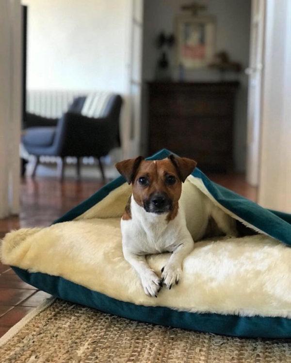 Charley Chau Velour Dog Snuggle Bed