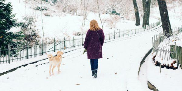 BEST WINTER DOG WALKS UK