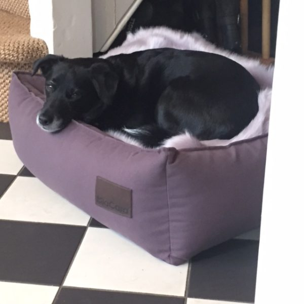 MiaCara Dog Bed