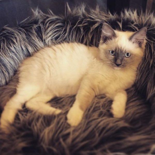 Capello Cat Bed MiaCara