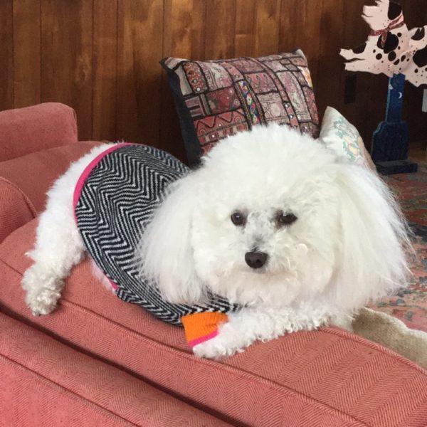 Dog Coats Sweaters