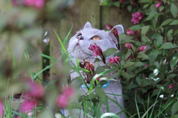 best plants for cats