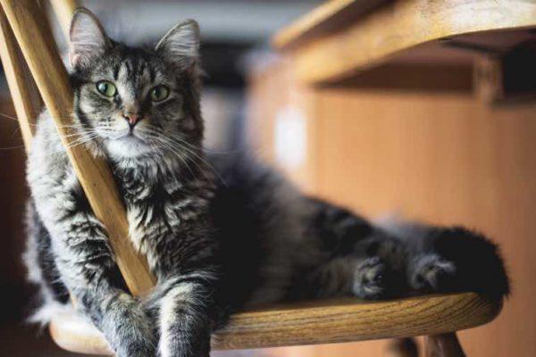 how to avoid overfeeding an indoor cat