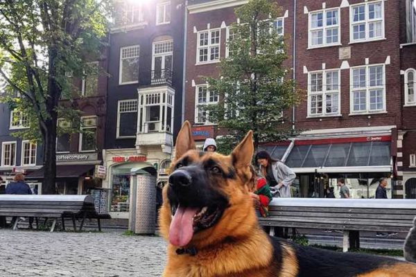dog friendly cities amsterdam