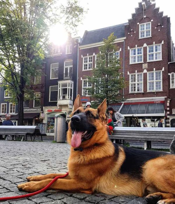 dog friendly cities amsterdam