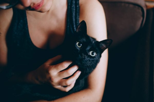 how to choose the right cat sitter