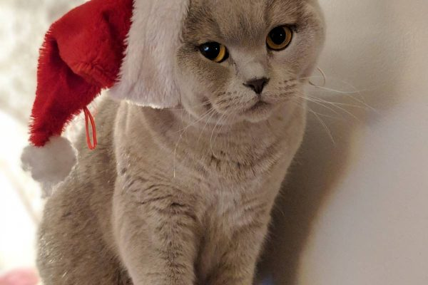 Christmas Survival Guide to Cats