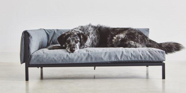 best designer dog beds 2019