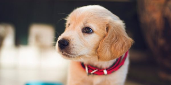 questions to ask a puppy breeder