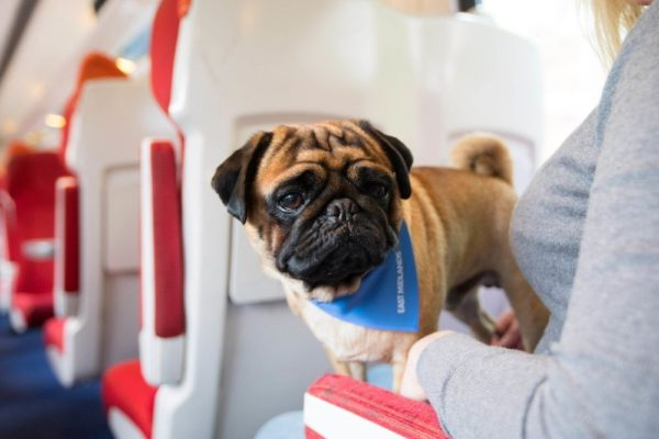 bing your dog on a train