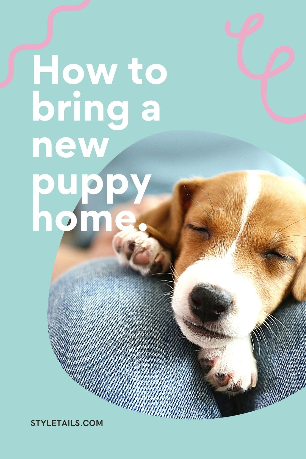 how to bring home a new puppy