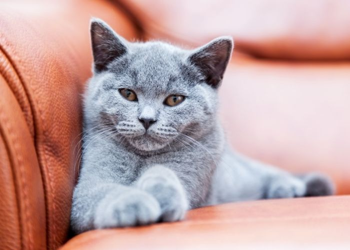 How To Keep Indoor Cats Happy And Healthy Styletails